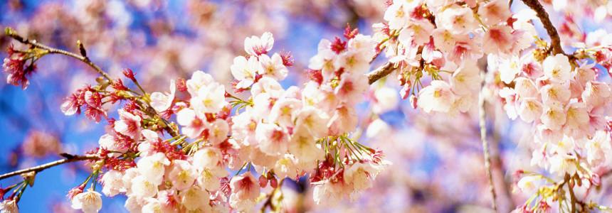 Как не заболеть этой весной?